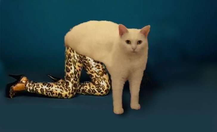 Este extrañísimo gato perezoso ha desatado una gran batalla que nadie esperaba
