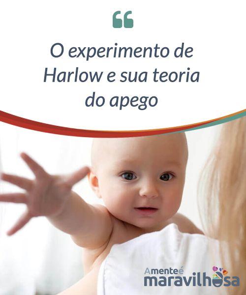 O experimento de Harlow e sua teoria do apego.  A #teoria do apego se concentra nos #fenômenos #psicológicos que acontecem quando #estabelecemos laços #afetivos com as outras #pessoas.