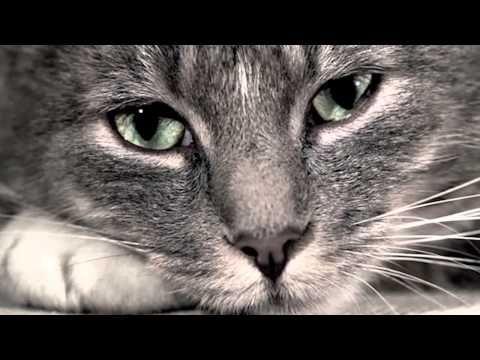▶ Sad Cat Diary HD) - YouTube