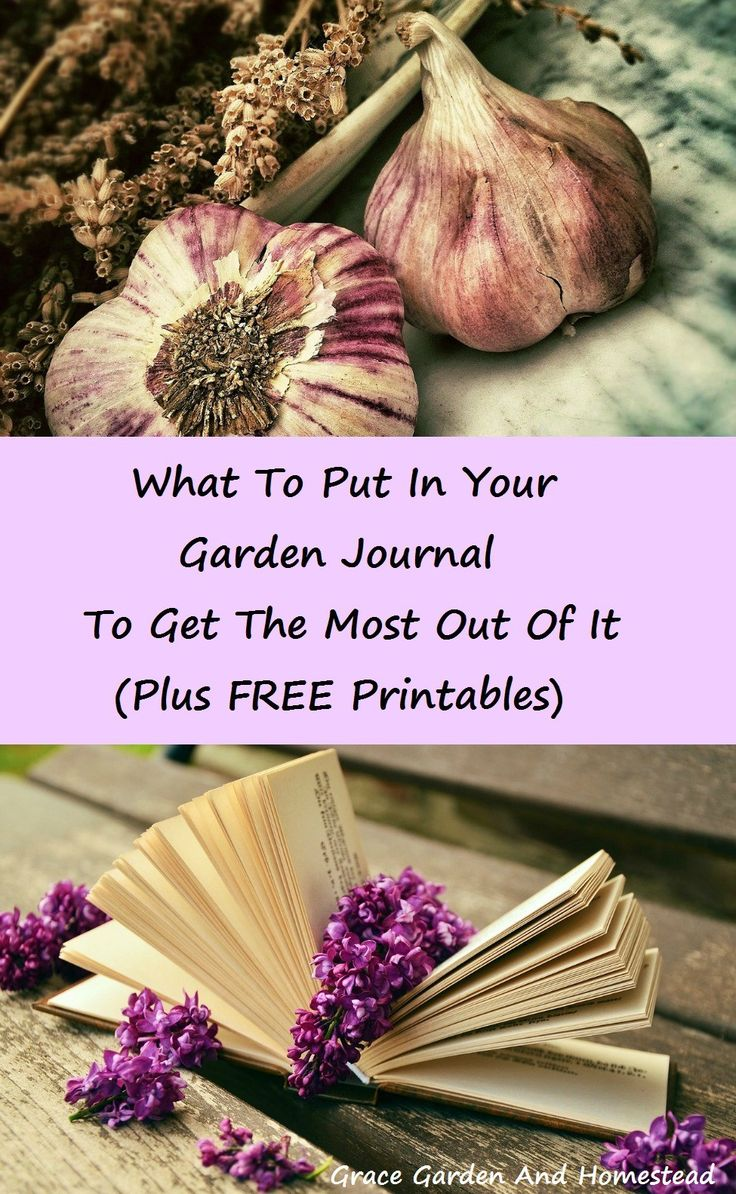 A list of things to put in your garden journal, plus how to make your own, or free printables to print one of your choosing out. Some stuff in here I wouldn't have thought of, but I'm definitely going to use now!
