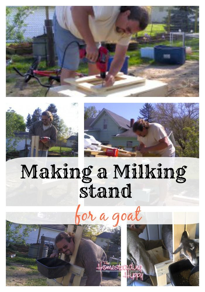 making-a-goat-milking-stand~The HomesteadingHippy