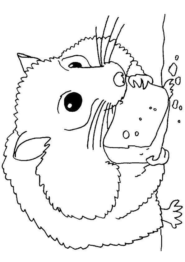 14 Best Hamster Coloring Pages Images On Pinterest Coloring Bookscoloring Pages And Zhu Zhu Bear Coloring Pages Coloring Pages To Print Coloring Pages