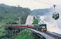 cairns rainforest train - Bing Images