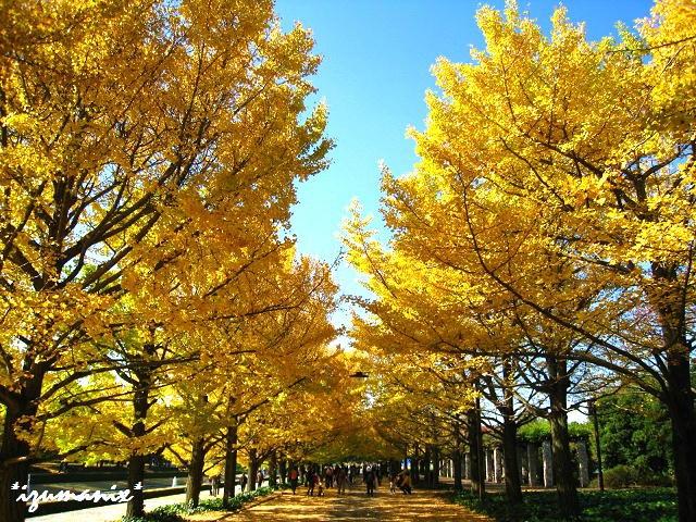 @昭和記念公園(Showakinenkouen)