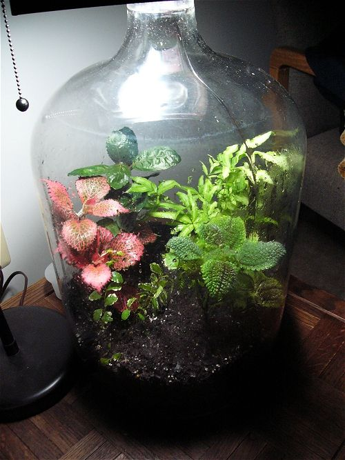 A Large Glass Bottle With A Few Plants These Are Hard To Come By