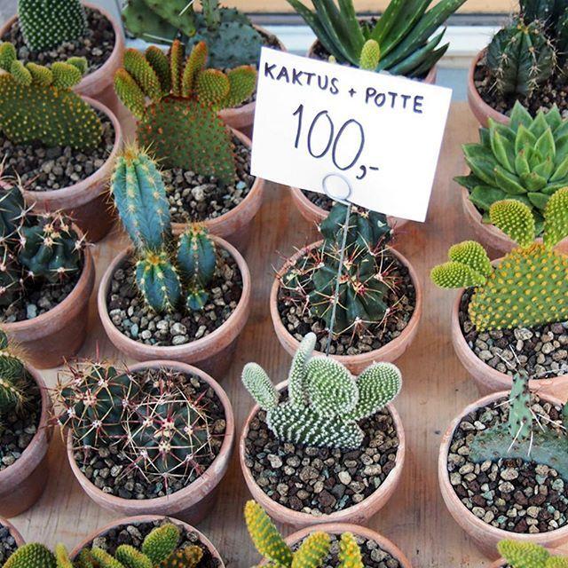 Cactus love! 🌵 Happy Friday 💚    #tgif #cactus #cactuslife #green #kaktus #friday #friyay #perjantai #igers #picoftheday #blogger