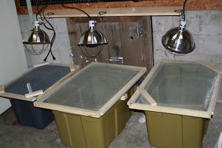 brooder boxes from plastic tubs with screened lids