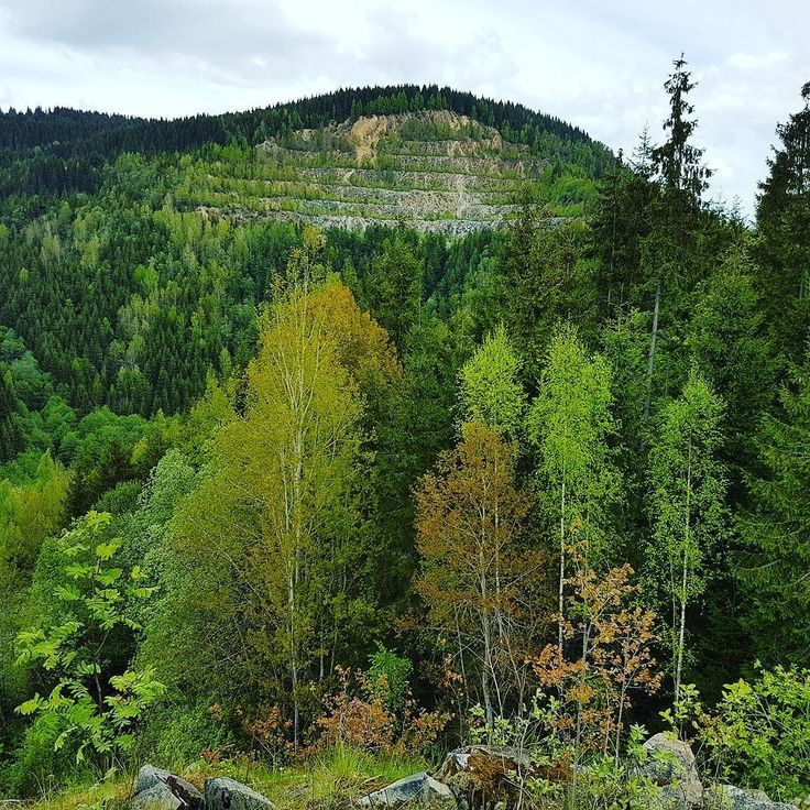 Stairs. #Nature #green #forest #trees #mountains #sky #travel #tripstagram #Transilvania #Transylvania #Romania
