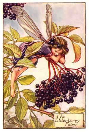 6 recipes from the elderberry bush (1921)