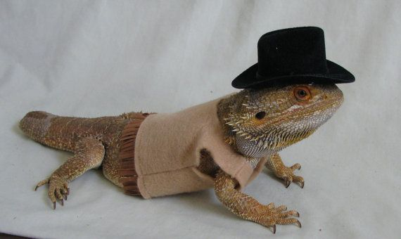 Cowboy Sheriff Costume for Bearded Dragons Two by PamperedBeardies