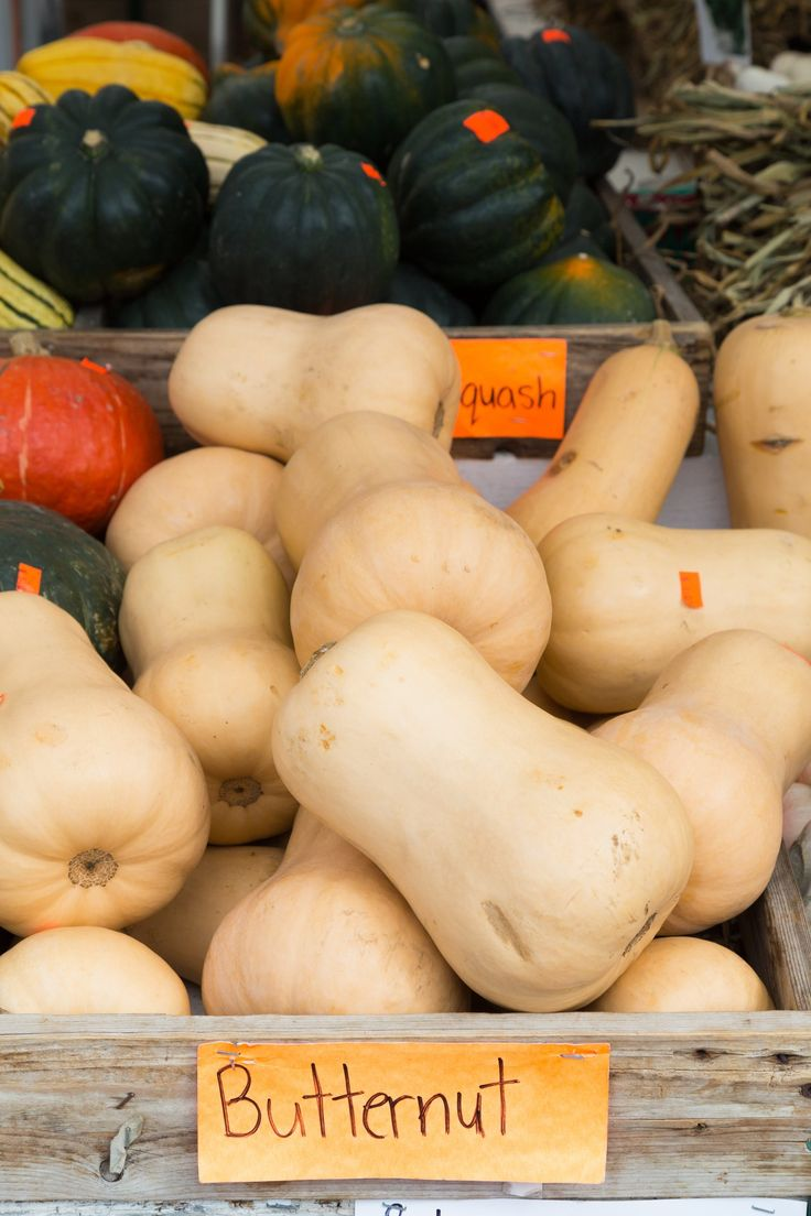 From acorn to turban, winter squash are some of the most delicious and versatile ingredients of the season