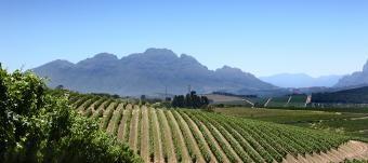Neetlingshof vineyards, Stellenbosch