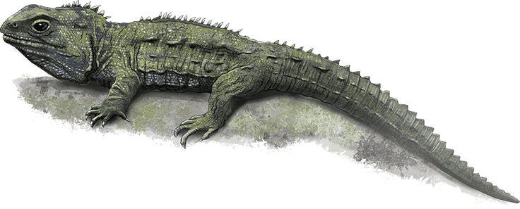 tuatara.png (850×344)