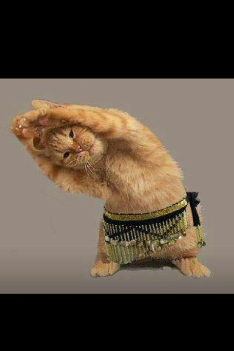 Belly dancing kitty