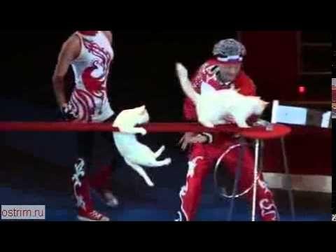 Энергичный цирковой номер с кошками