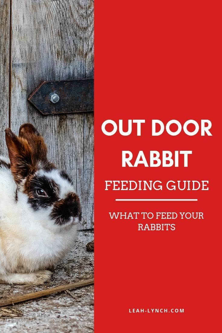What To Feed A Rabbit Show Rabbits Pets Pet Insurance For Dogs