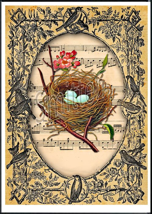 Bird's Nest Sheet Music Art Print.: