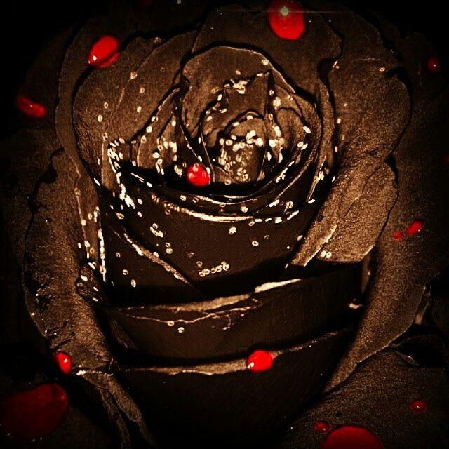 (Sweet) Valentine's day!