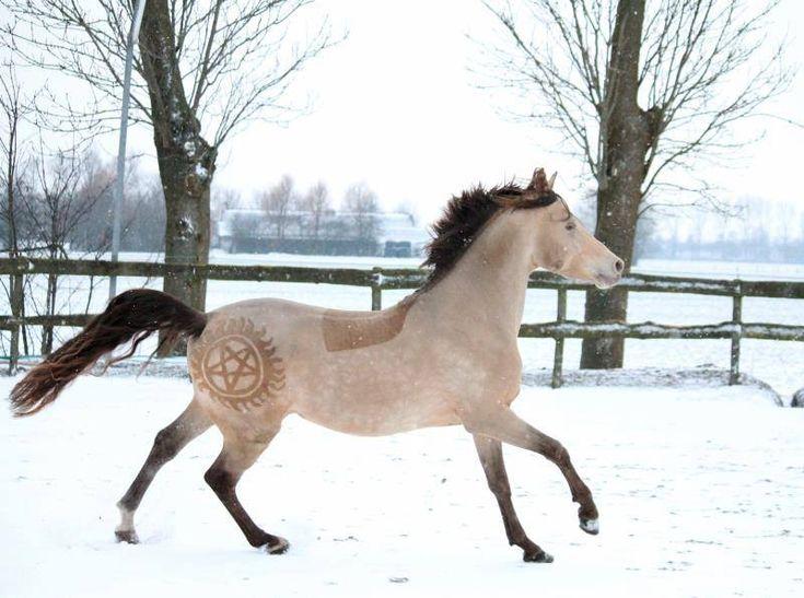 Paard Trimmen tips