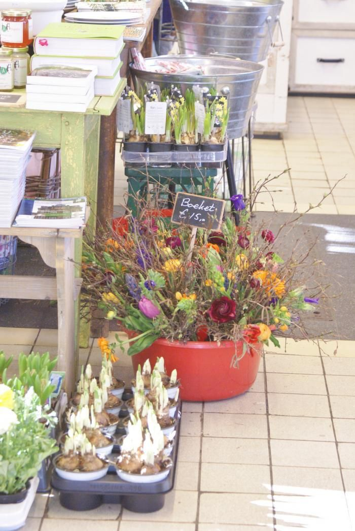 Villa Augustus bulbs by Ingrid Jansen: Gardenista