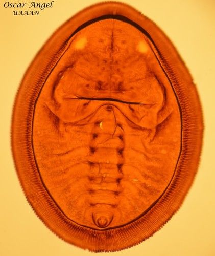 La entomología es la ciencia que estudia los insectos, la investigación de estos seres vivos requiere gran precisión en sus características para una adecuada clasificación. Leer más aquí .