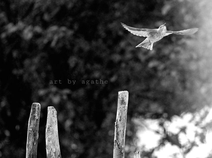 Bird black&white