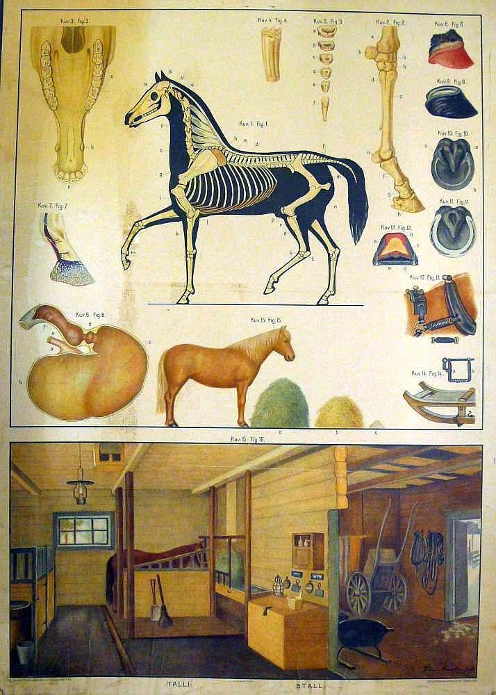 Opetustaulu, hevonen ja talli - Board of Education, horse and stables - Finnish horse