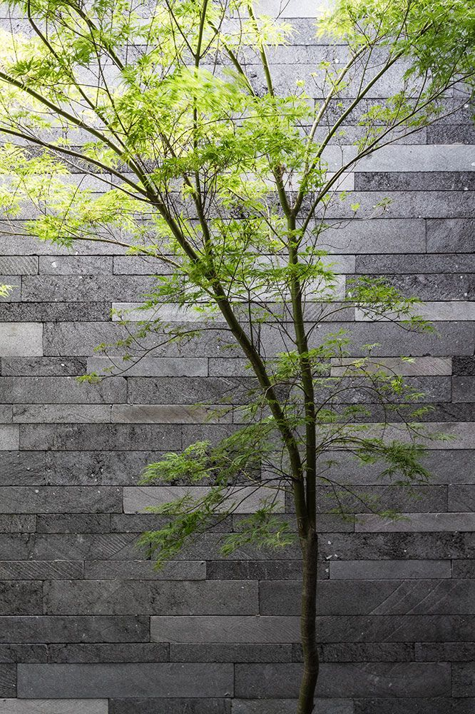 Tree Against The Lavastone Finish On Upper Level Planter Bed At Canterbury  Road Residence In Toorak