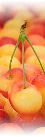 Rainier Cherries, yum.