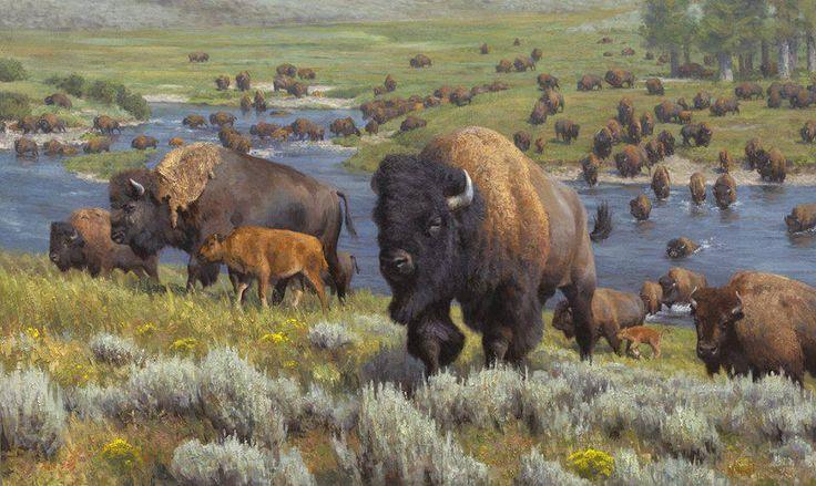 BISON HERD | ANIMALS | Pinterest | Buffalo, Wildlife and ...