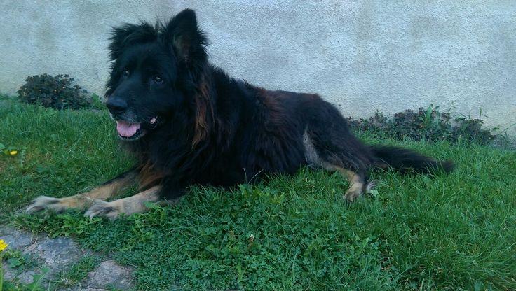 Murphy, my 'little' sweet #dog :D <3