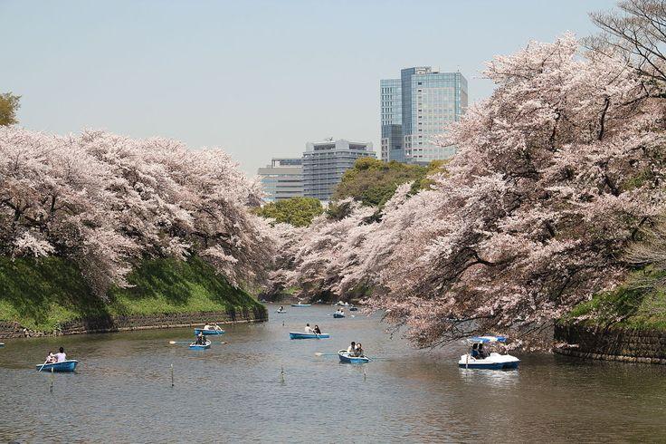 """* Tóquio * Capital do Japão. """"Chidorigafuchi"""", Jardins do Palácio Imperial. 2011."""