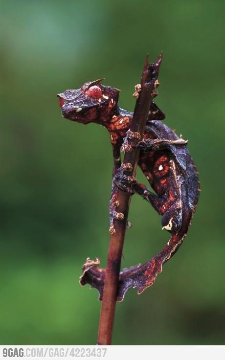 Demonic Horned Lizard. nature