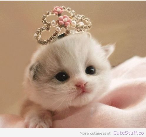 I'm the queen!