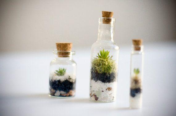 Mini Succulent Terrarium Set of 3, DIY Glass Vial Terrarium, Succulent Cuttings, Miniature Plants. $18.00, via Etsy.