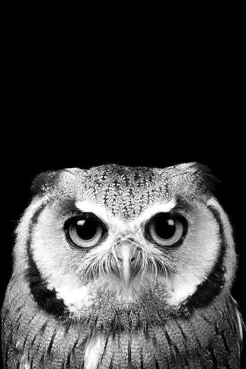 Linda coruja em preto e branco. Mais