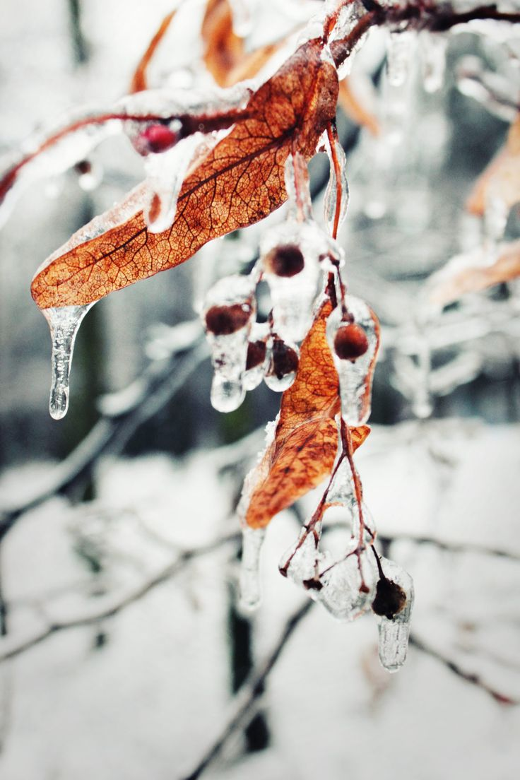 berry in ice