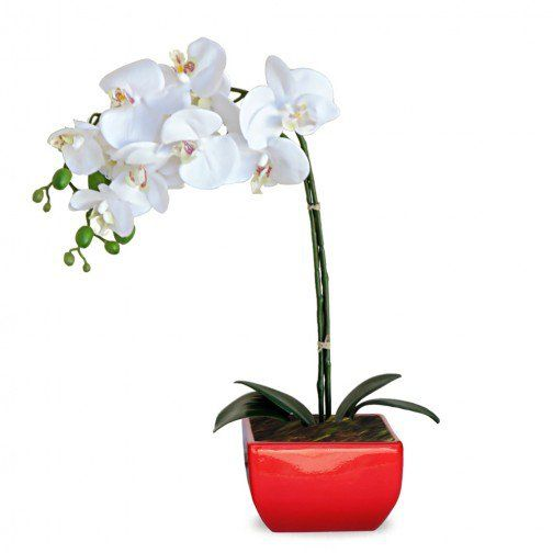Arranjo Orquideas 45x20 cm