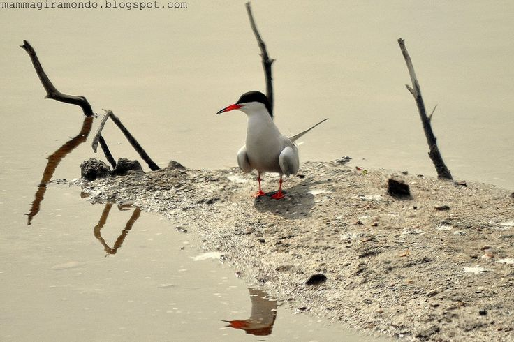 Birdwatching alle saline di Cervia