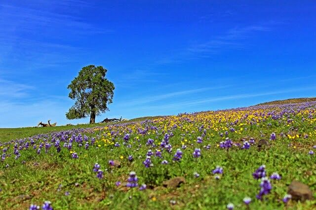Table Mountain - Oroville,  CA
