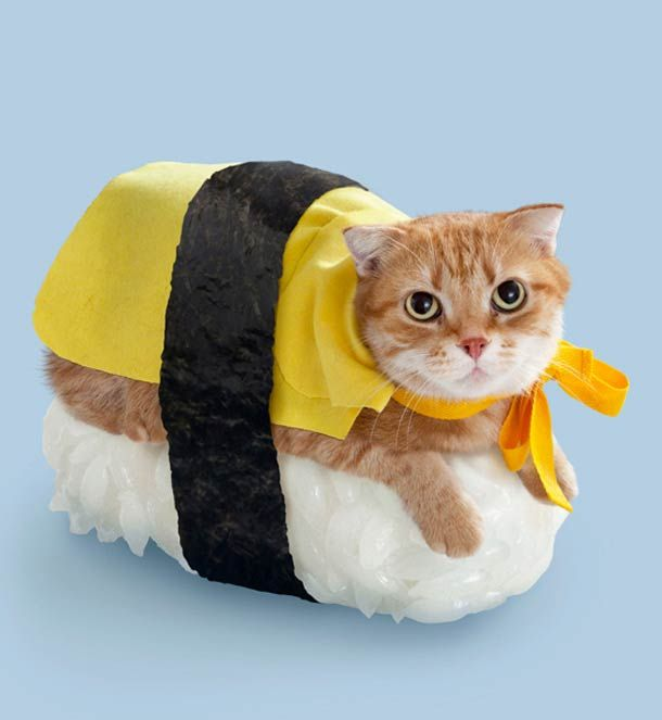 Neko-Sushi. Why? Because Japan. That's why.