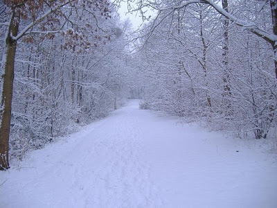 C'ero soltanto. C'ero. Intorno cadeva la neve. (Issa)