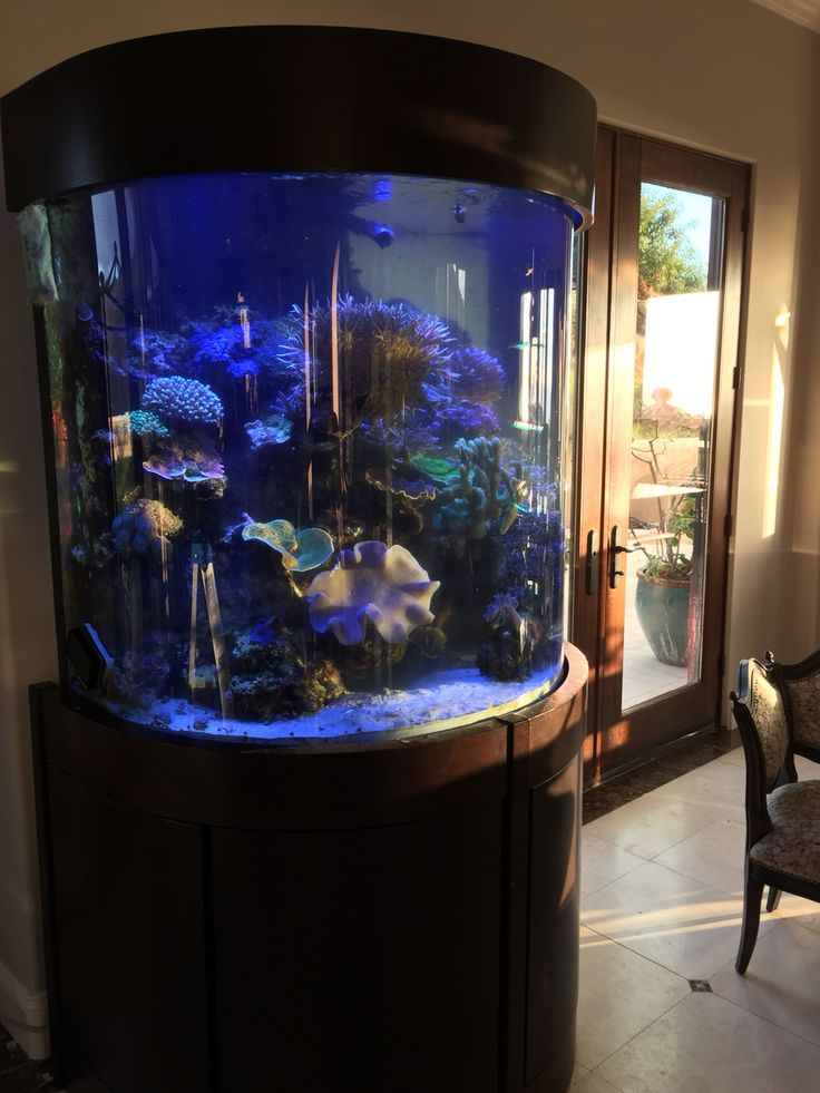 140 gallon half cylinder reef aquarium fish pinterest for Cylinder fish tank