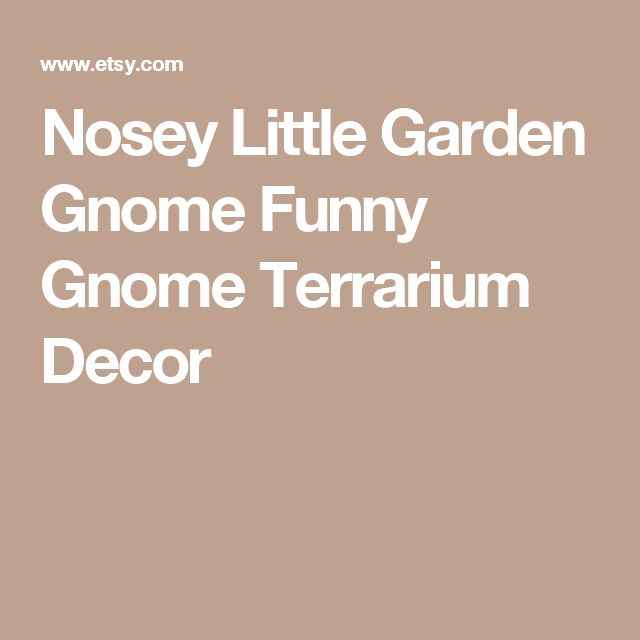 Nosey Little Garden Gnome  Funny Gnome  Terrarium Decor