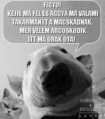 Vicces kutya cica
