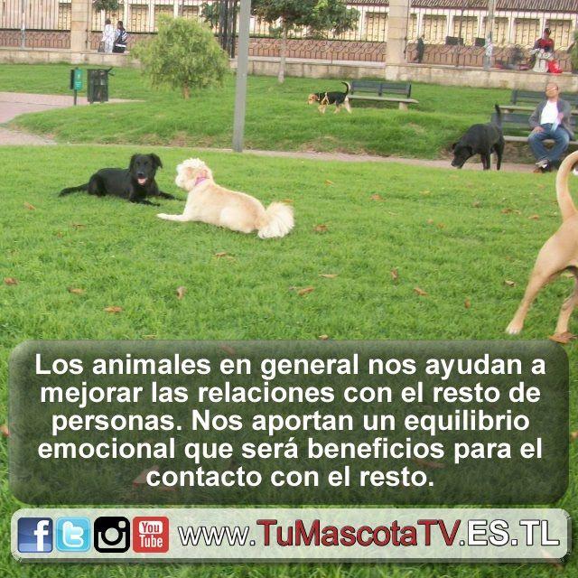 #mascotas #comoperrosygatos @bfossung