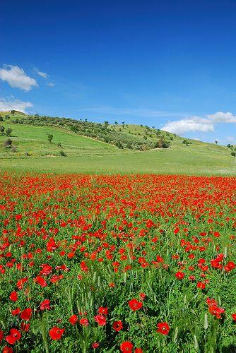 Spring in Sicily - Primavera in Sicilia
