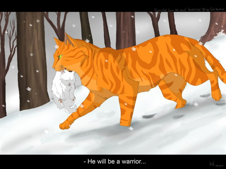 Fireheart bringing Cloudkit, Princesses first born kit, to camp so he can become a warrior!