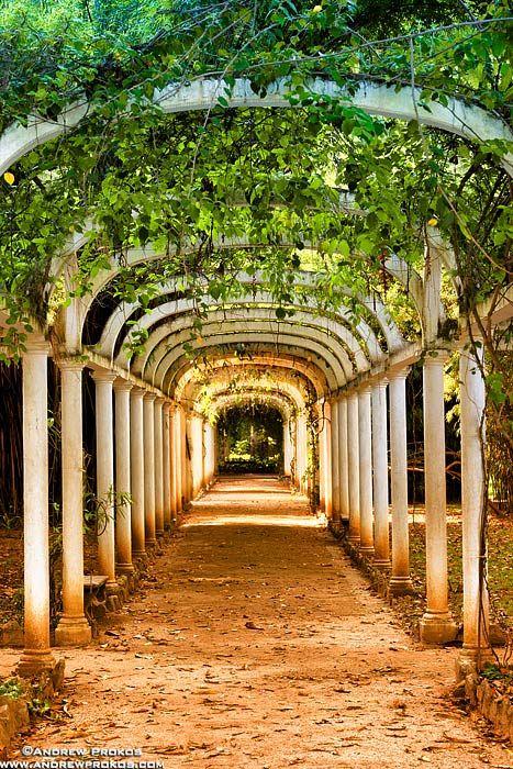Jardim Botanico Covered Path, Rio de Janeiro