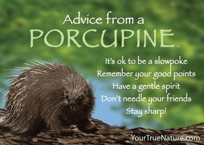 A Porcupine's best points...
